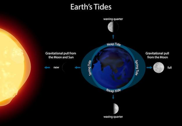 Diagramme montrant les marées terrestres