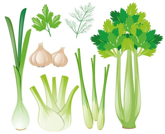 Differen types de légumes