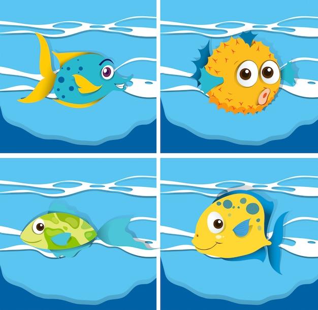 Différent type de poisson