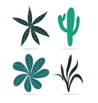 Différentes feuilles tropicales feuillage nature cactus plante icônes isolées