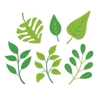 Différentes feuilles vertes pack design plat