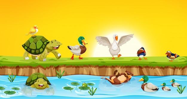 Différents animaux dans la scène de l'étang