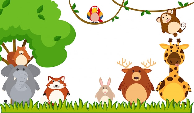 Différents types d'animaux dans le parc