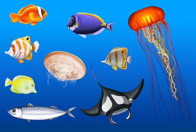Différents types d'animaux marins