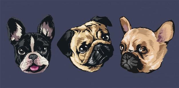 Différents types de chiens petits et grands
