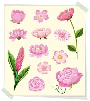 Différents types de fleurs roses