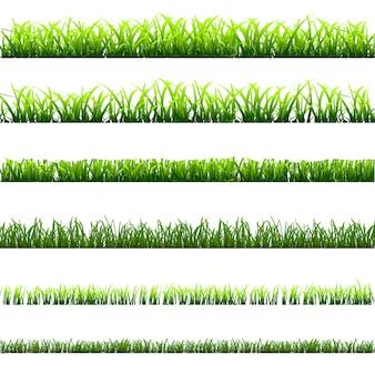 Différents types d'herbe verte
