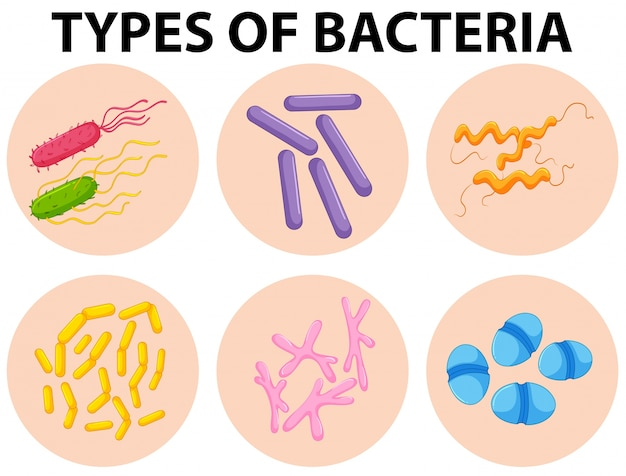 Différents types d'illustration bactérienne