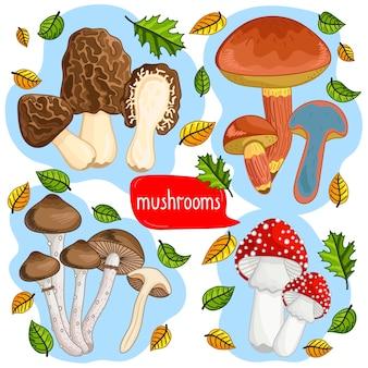 Différents types d'illustration de champignons