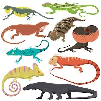 Différents types de reptiles de lézards isolés