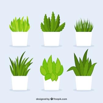 Divers cactus avec des pots