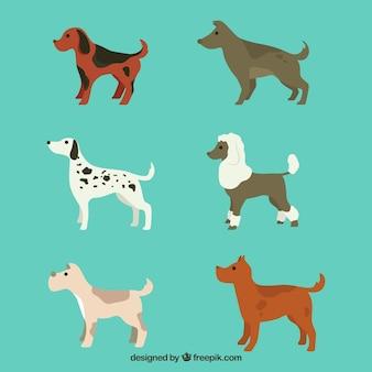 Divers chiens profil en forme plate