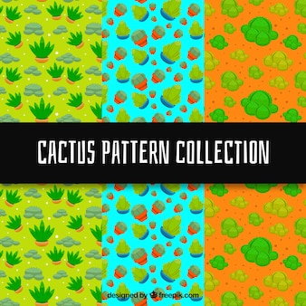 Divers motifs colorés de cactus