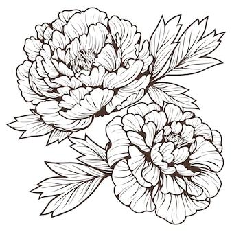 Doodle art de la belle fleur de pivoine