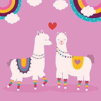 Doux lamas ensemble