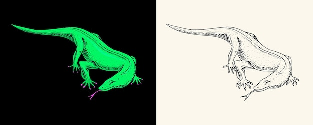 Le dragon de komodo surveille les reptiles exotiques les animaux sauvages dans la nature gravés à la main
