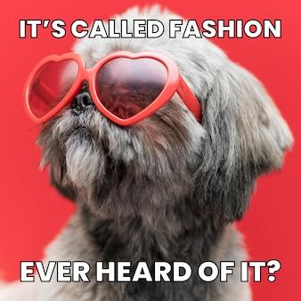 Drôle appelez-le meme de mode