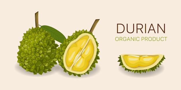 Durian délicieux fruits entiers et pelés