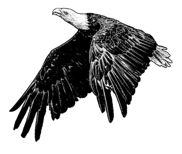 Eagel fly