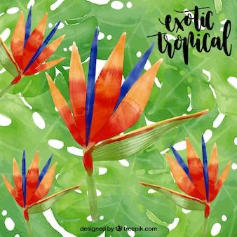 Eau couleur exotique fond de fleurs tropicales