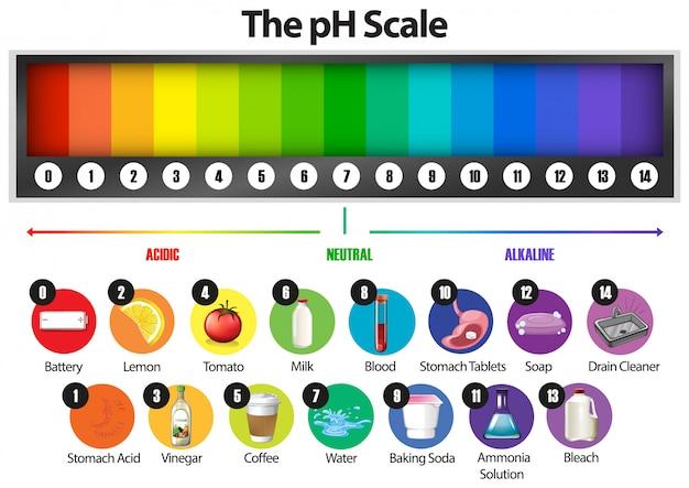 L'échelle de ph sur blanc