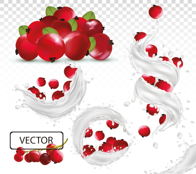 Éclaboussure de lait réaliste 3d avec des baies de groseille rouge. yaourt aux fruits frais. splash différent. cocktail de lait. illustration.