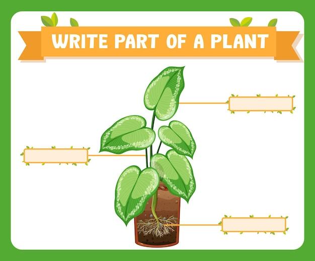 Écrire des parties d'une feuille de travail sur les plantes pour les enfants