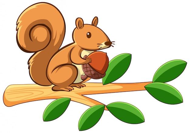 Écureuil sur blanc