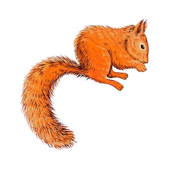 Écureuil dessiné à la main mange des noix