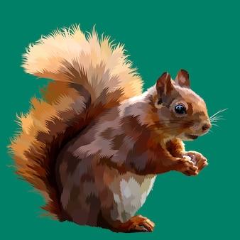 Écureuil sur illustration vectorielle pop art