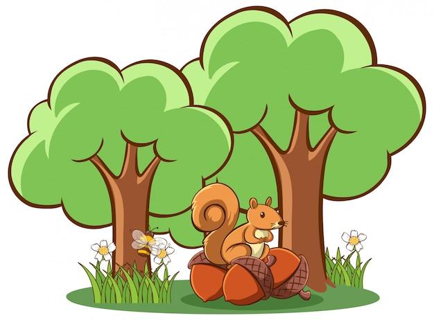 Écureuil et noix sur blanc