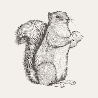 Écureuil réaliste vector illustration