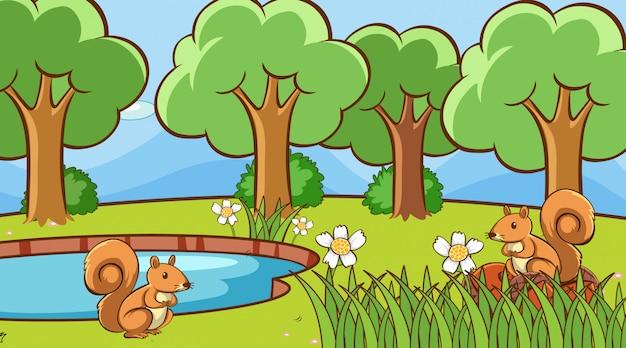 Écureuils dans la forêt