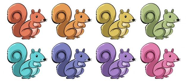 Écureuils de différentes couleurs