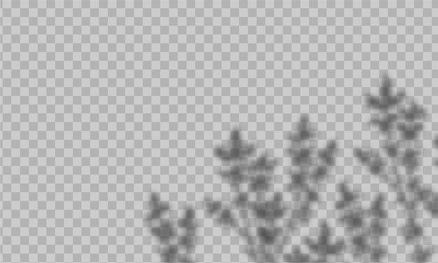 Effet d'ombre de superposition. avec une lumière douce et les ombres floues des plantes