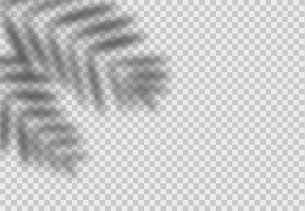 Effet de superposition d'ombre de feuille de palmier