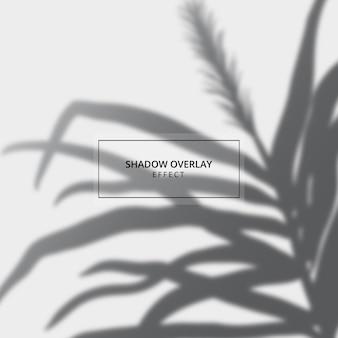 Effet de superposition d'ombre végétale sur fond gris