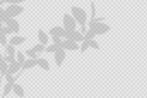 Effet de superposition d'ombres transparentes
