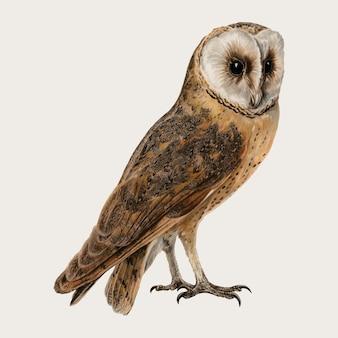 Effraie des clochers oiseau vecteur dessiné à la main