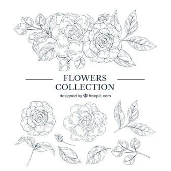 Élégante collection d'éléments floraux dessinés à la main