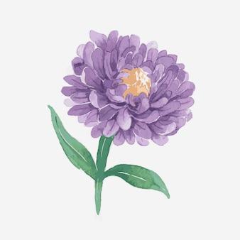 Élément d'autocollant dessiné main aquarelle violet aster vector