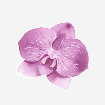 Élément d'autocollant dessiné main orchidée pourpre aquarelle