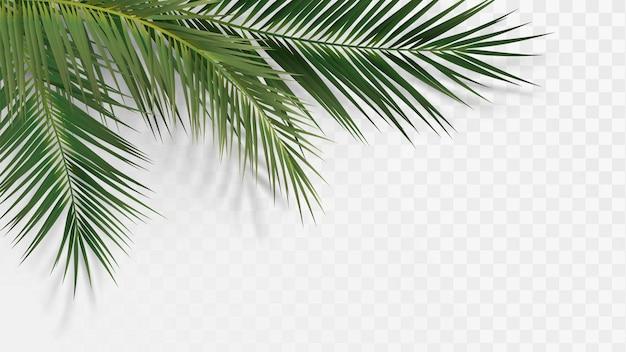 Élément Décoratif Avec Des Branches De Palmier Vecteur Premium