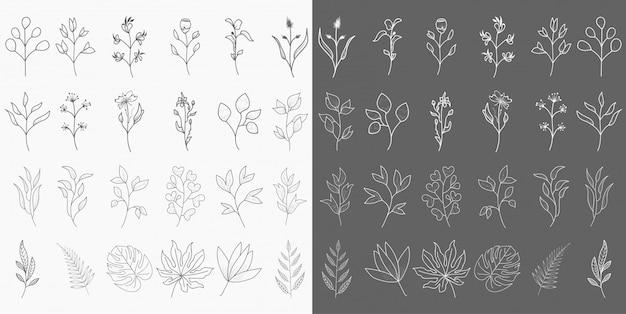 Éléments botaniques dessinés à la main