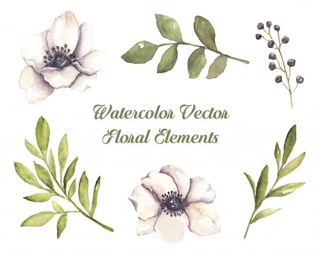 Éléments botaniques floraux aquarelles