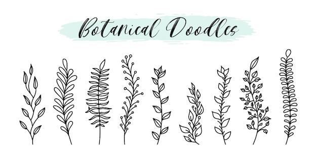 Les éléments botaniques et floraux vectoriels doodle dessinés à la main définissent le style de ligne. branches de plantes à croquis naturels, feuilles, baies pour la conception de médias sociaux, badges, étiquettes, image de marque.