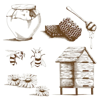 Éléments de croquis de miel dessinés à la main