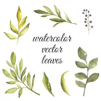 Éléments de feuilles aquarelle