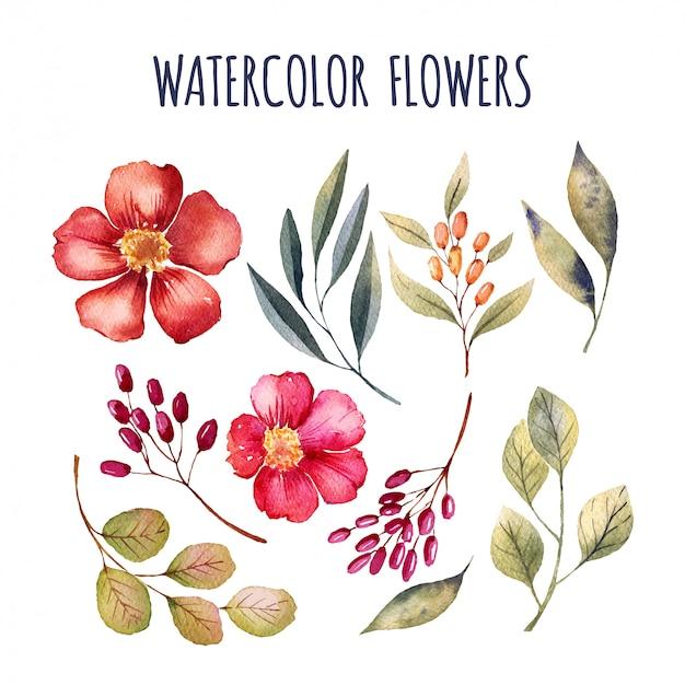 éléments de fleurs d'aquarelle
