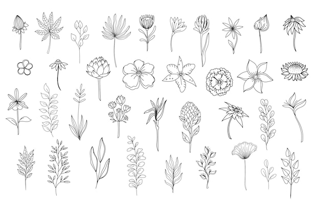 Éléments floraux de dessin au trait. décrire le feuillage naturel des feuilles d'herbes. définir l'illustration vectorielle botanique de fleurs dessinées à la main.